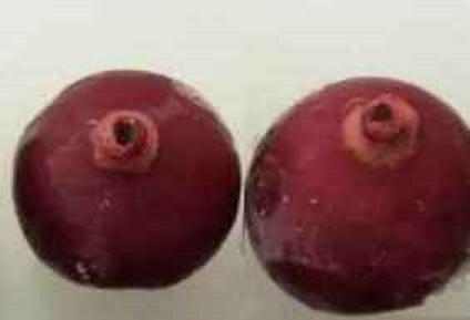Fruto pode combater doenças graves. (Foto: Divulgação Grupo pesquisadores)