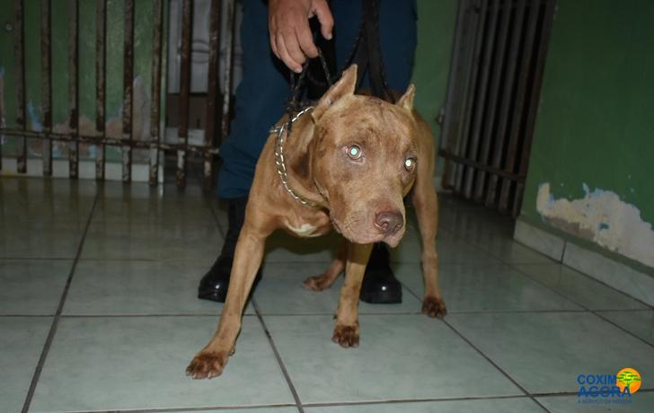 Cachorro escapou da residência (Foto: Coxim Agora)