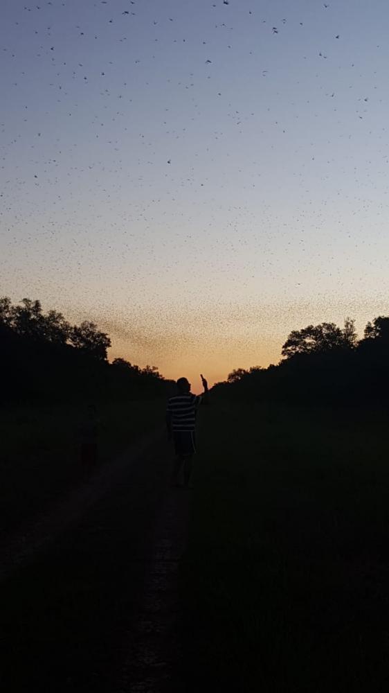 Nuvens de gafanhotos assusta moradores de fazenda no Departamento do Alto Paraguai
