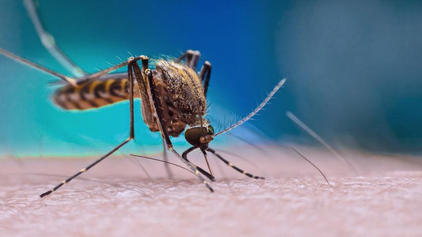 Com mais de 59 mil casos, MS é o 2° no ranking nacional com maior incidência de dengue