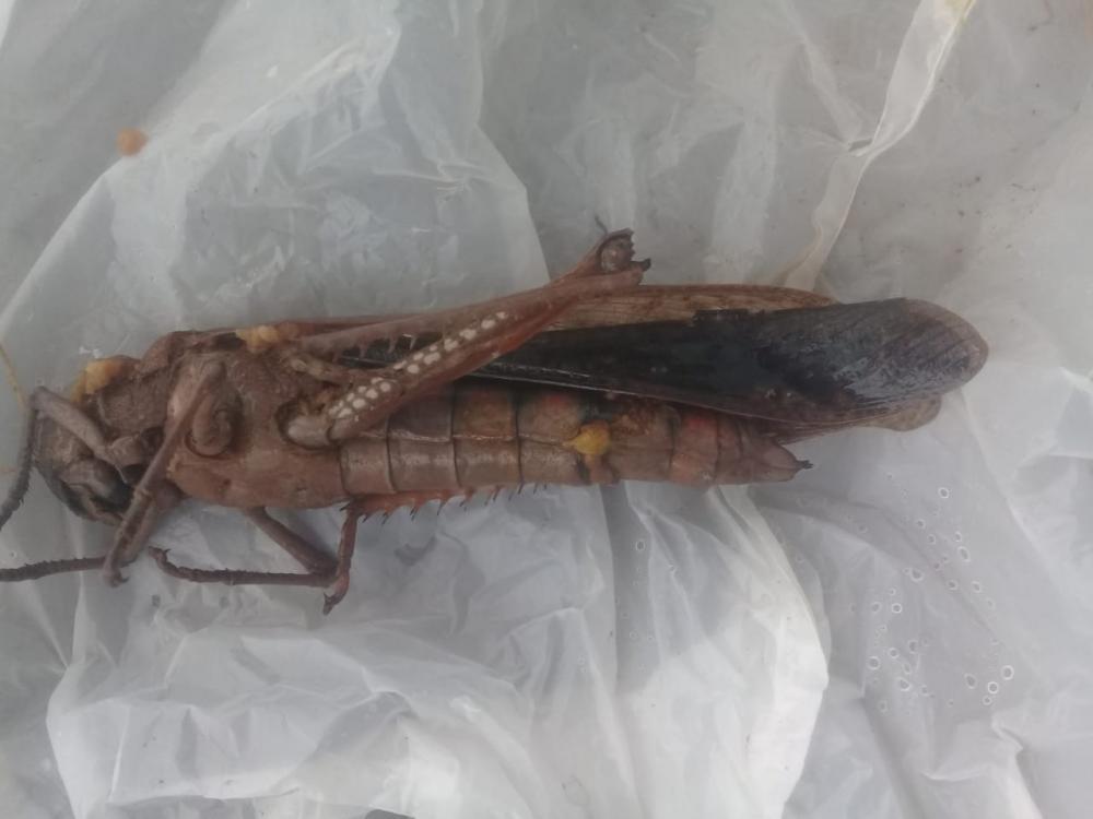 Morador encontrou inseto
