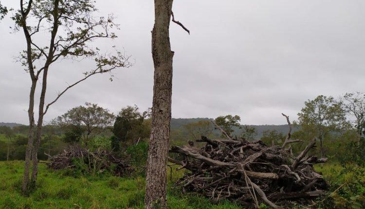 Desmatamento verificado por imagem de satélites ocorreu há algum tempo (Divulgação, PMA)